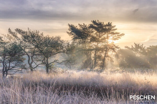 Beegden, Limburg, Landschapsfotografie, frosty morning